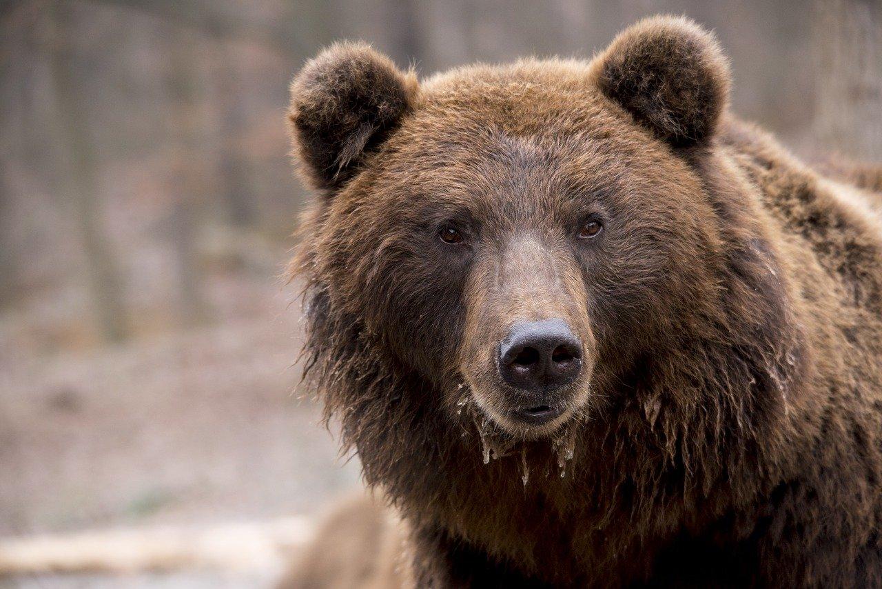 bitcoin bear-1903099_1280