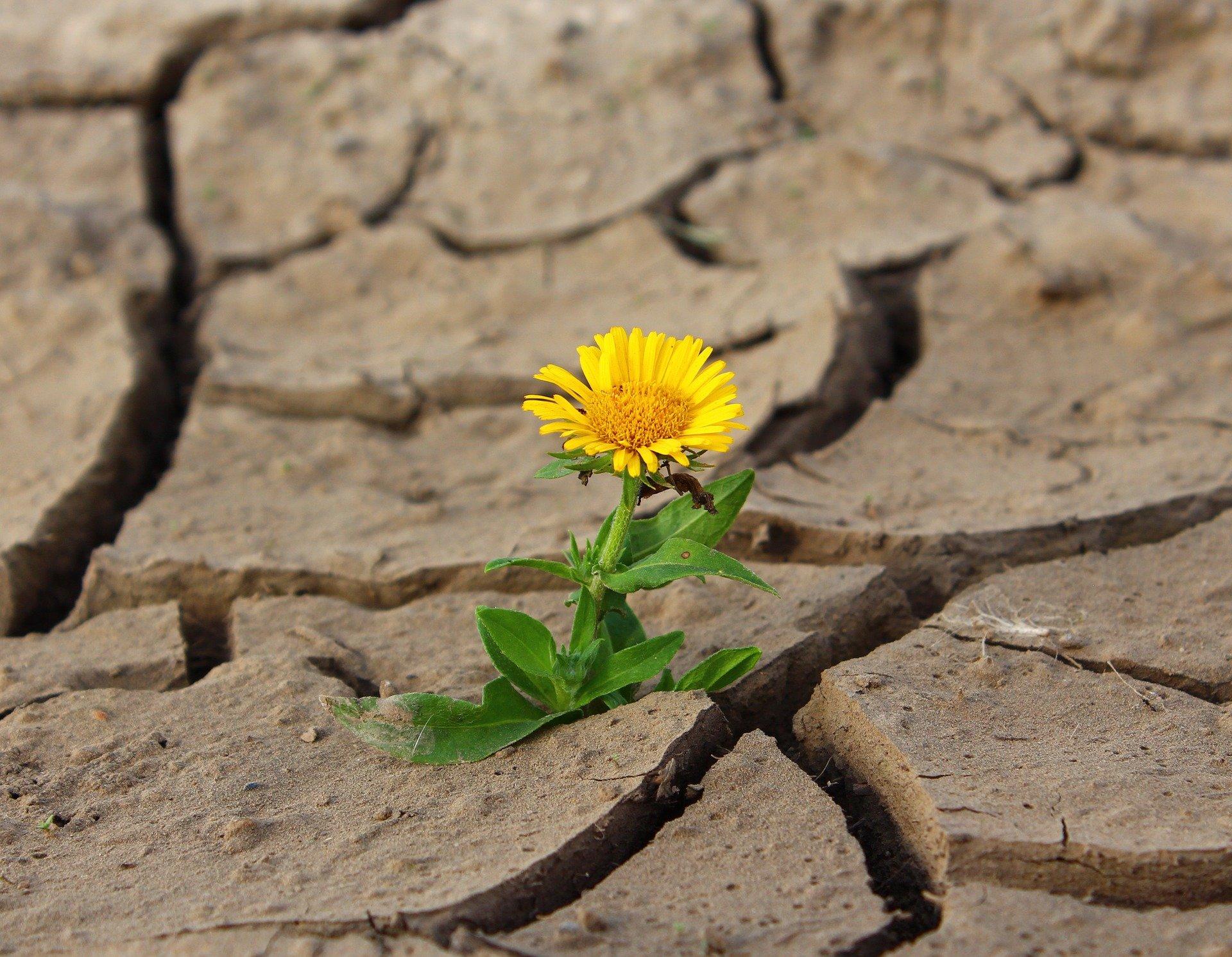 xrp ripple sec suvivor flower-887443_1920