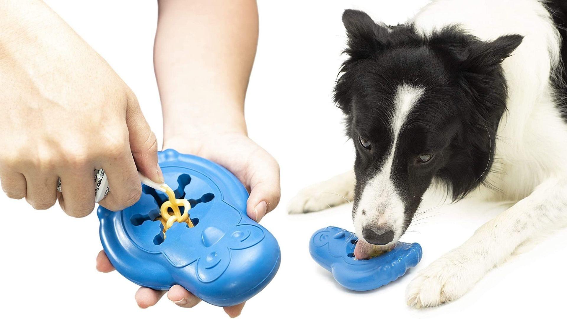Alguien pone golosinas en un juguete para perros con forma de pingüino y un perro se lo come.