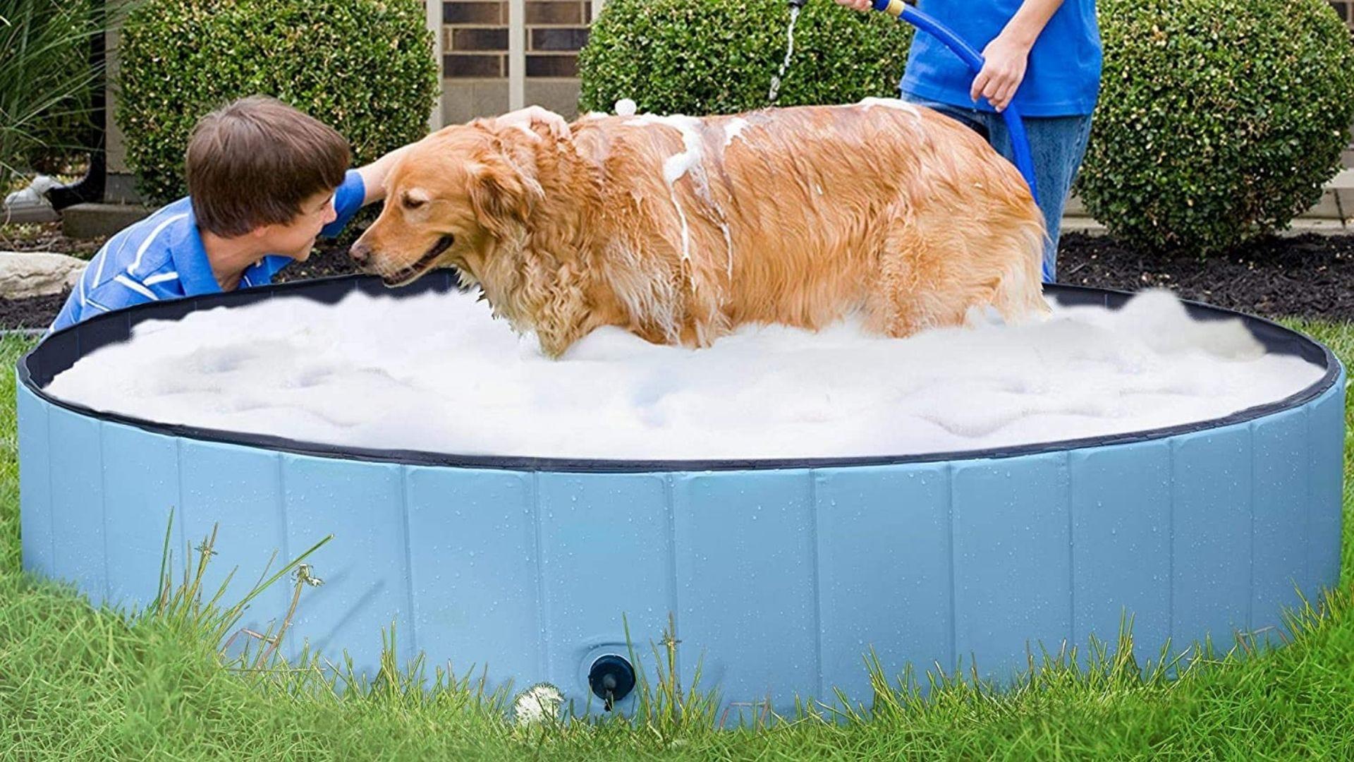 Un niño juega con un perro en una piscina para perros.