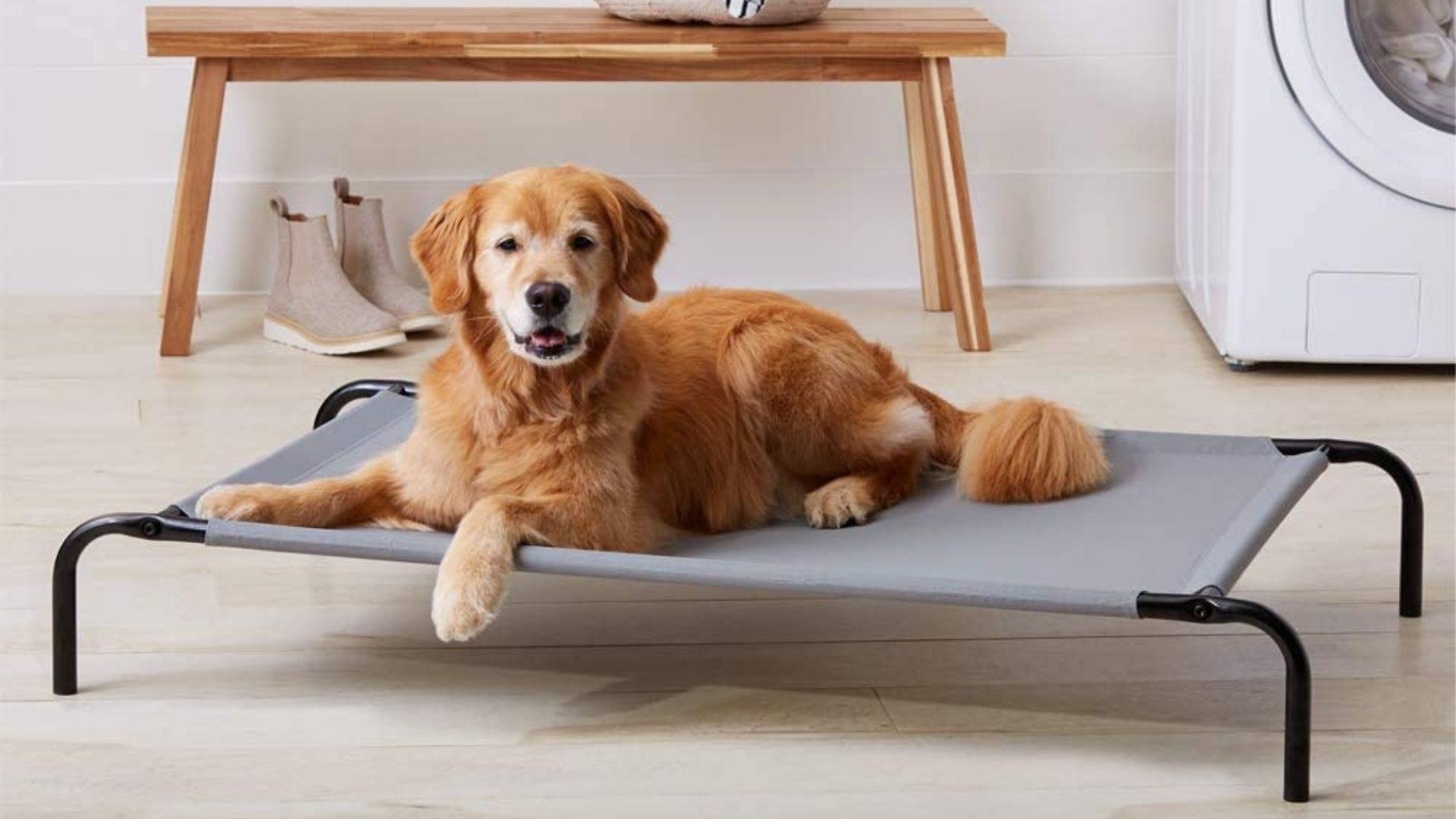 Un perro se sienta en una cama para perros elevada.
