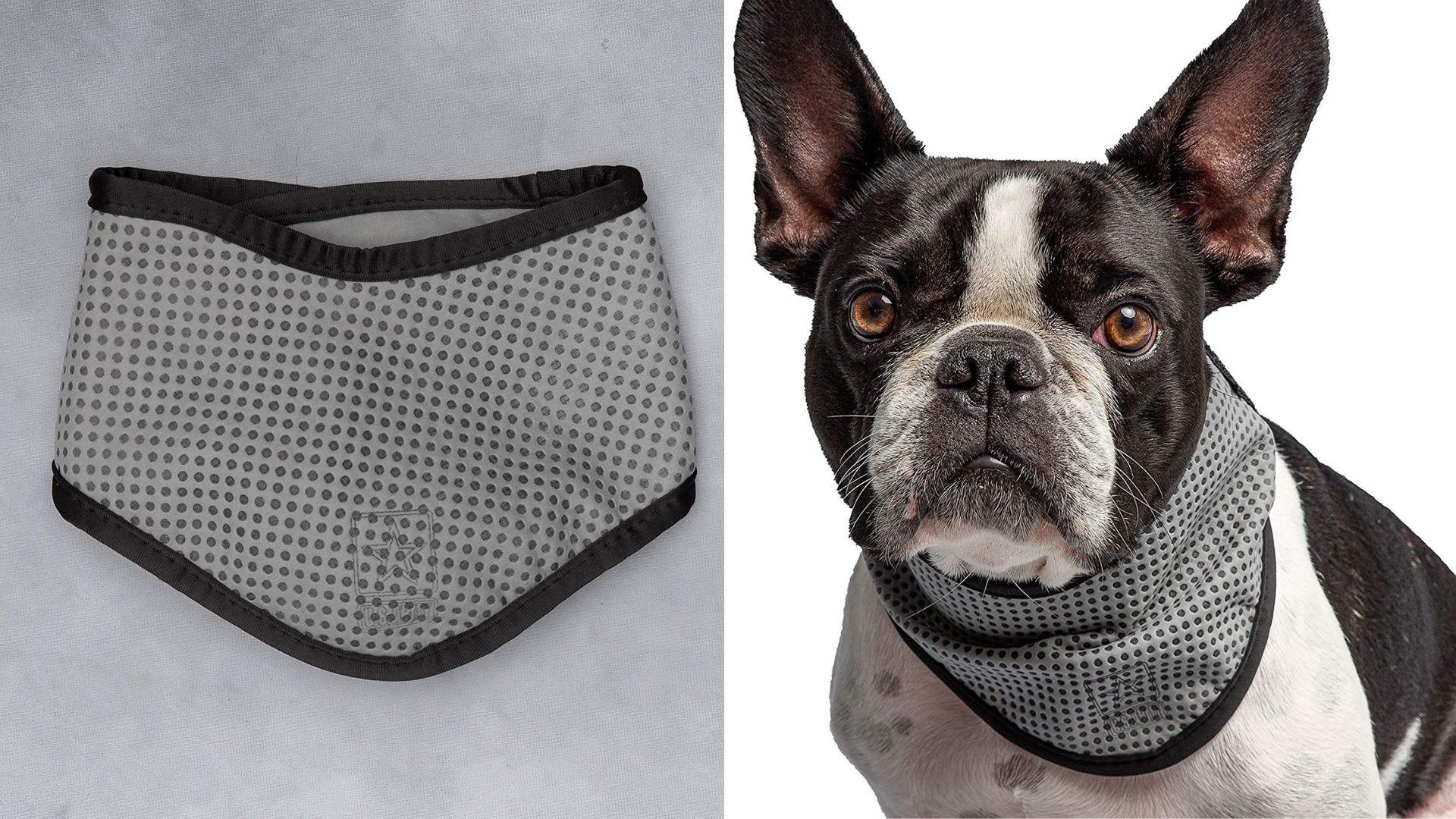 Un pañuelo gris y un perro lleva un pañuelo gris.