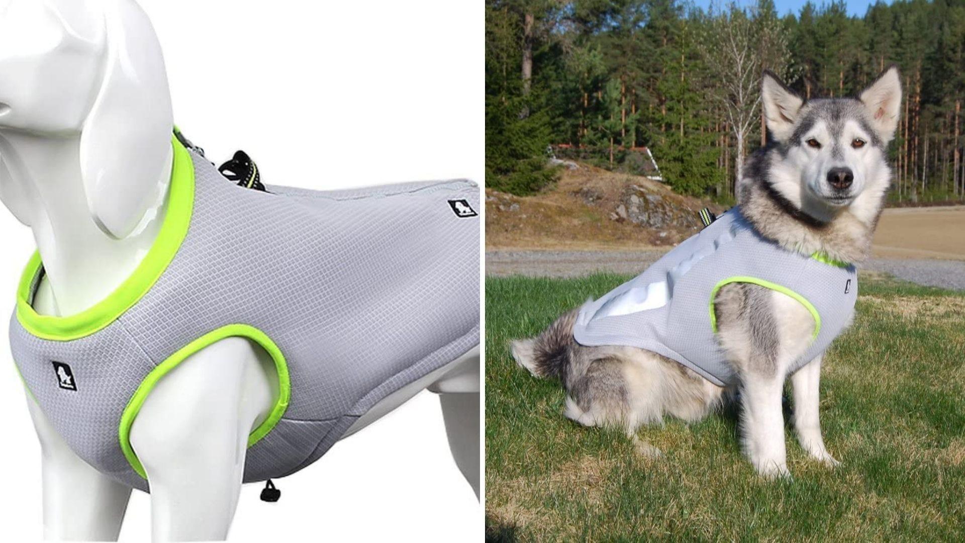 Un maniquí de perro usa un chaleco gris y verde y un perro usa el mismo chaleco.