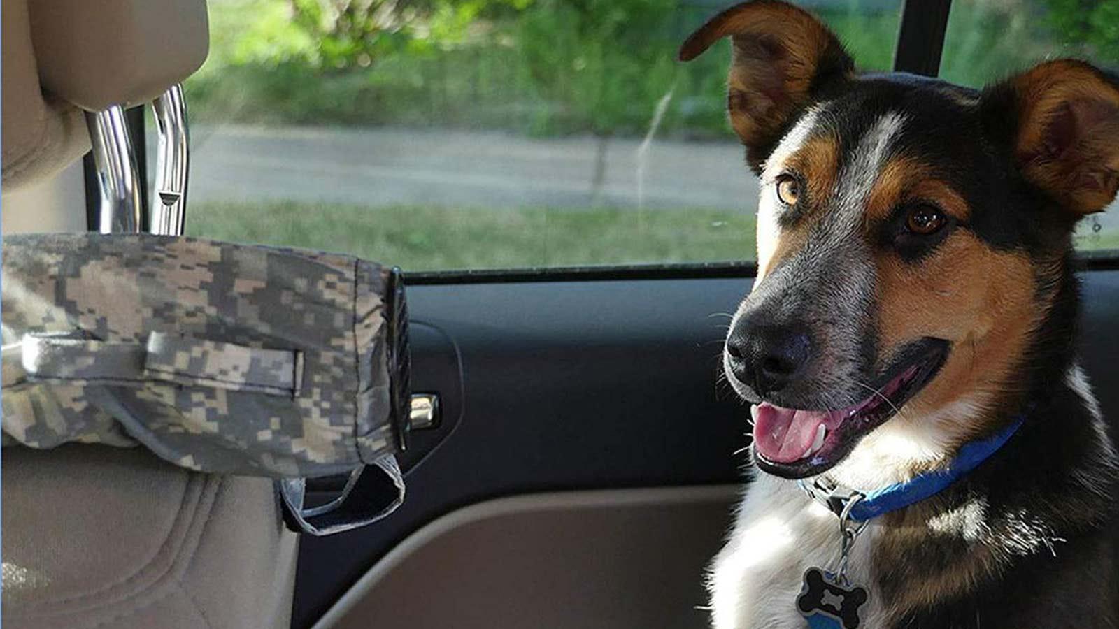Un perro se sienta en el asiento trasero de un automóvil con un tubo extensor de aire acondicionado que empuja el cabello frío hacia él.