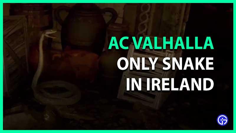 Dónde encontrar y matar solo serpientes en Irlanda