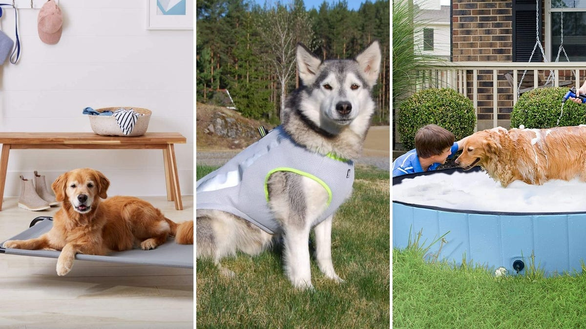 Un perro mezcla de laboratorio sentado en una cama elevada, un perro husky con un arnés gris y un niño bañando a un perro perdiguero en una piscina.