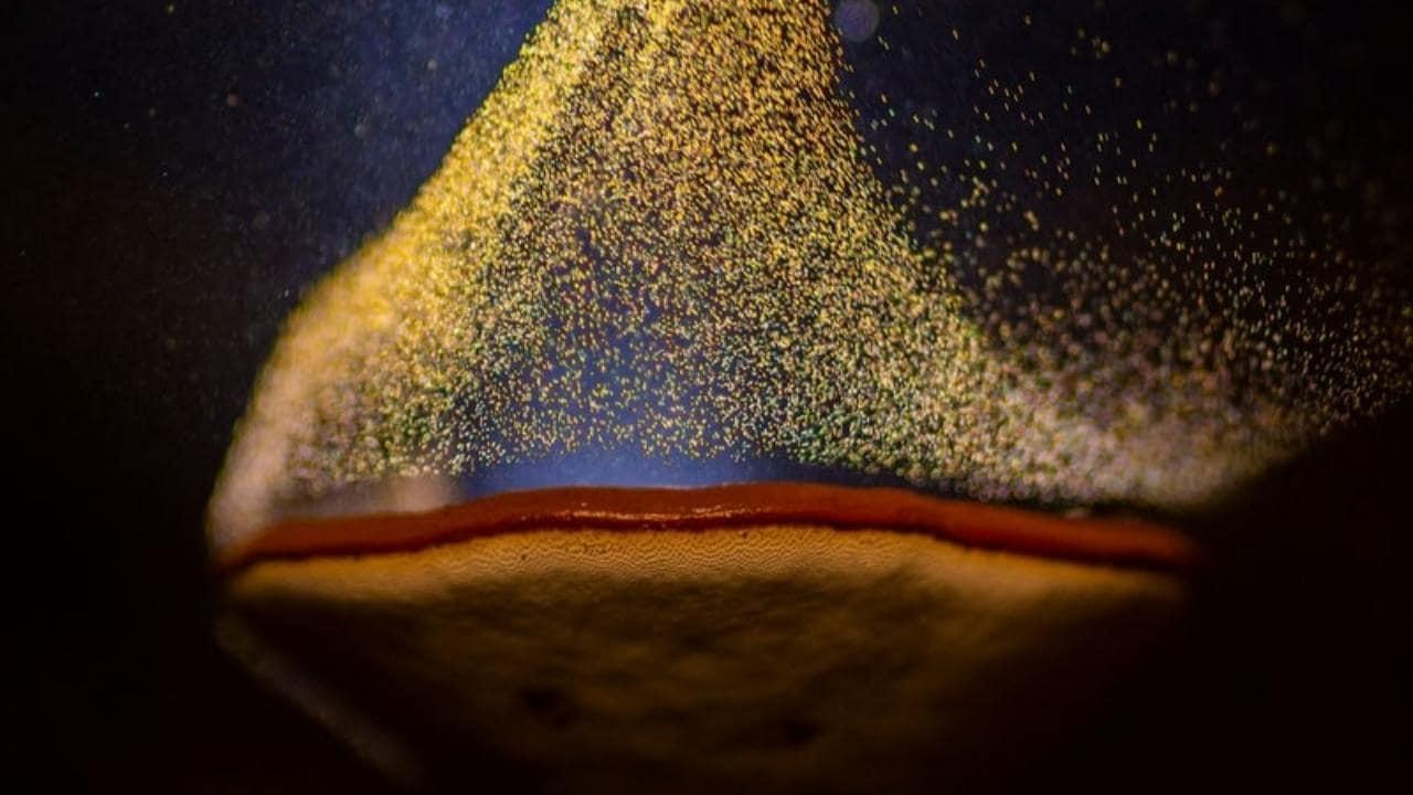 El fotógrafo indio de naturaleza y vida silvestre Sarang Naik capturó un hongo silvestre que crecía alrededor de su casa después de iluminarlo con una linterna.  Su imagen titulada 'El cáliz de fuego' ganó en la categoría Arte de la naturaleza.