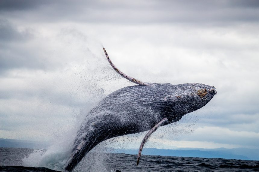 Bitcoin Exchange Reserves Make A Downtrend, Are Whales Starting To Accumulate?