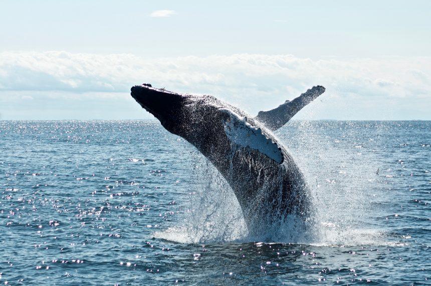 Bitcoin Whales