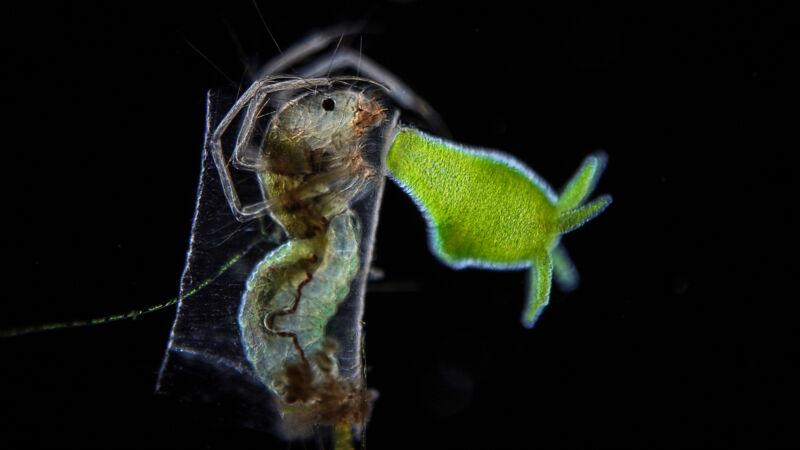 Imagen de un objeto verde junto a la cabeza de un insecto.